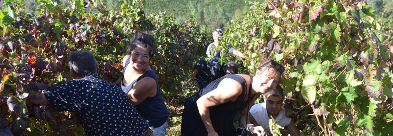 Sardiniens vingårdar