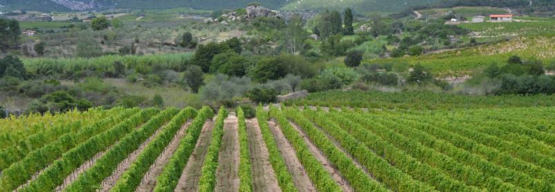 Sardiniens vingårdar-web-september-2013-289.jpg