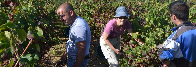 Sardiniens vingårdar-web-september-2013-480.jpg