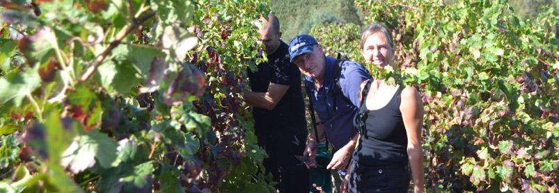 Sardiniens vingårdar-web-september-2013-481(1).jpg