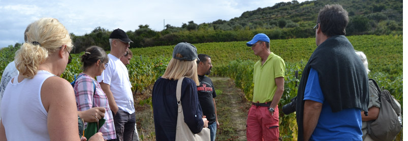 Sardiniens vingårdar-web_014.jpg