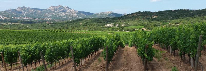 Sardiniens vingårdar-web_20140617_155457.jpg