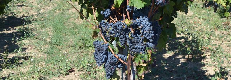 Sardiniens vingårdar-web_dsc_0164.jpg